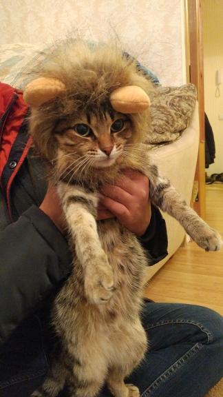 Kostuum voor kat